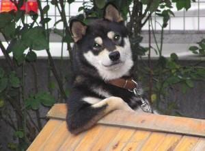 cool-dog.jpg?w=604